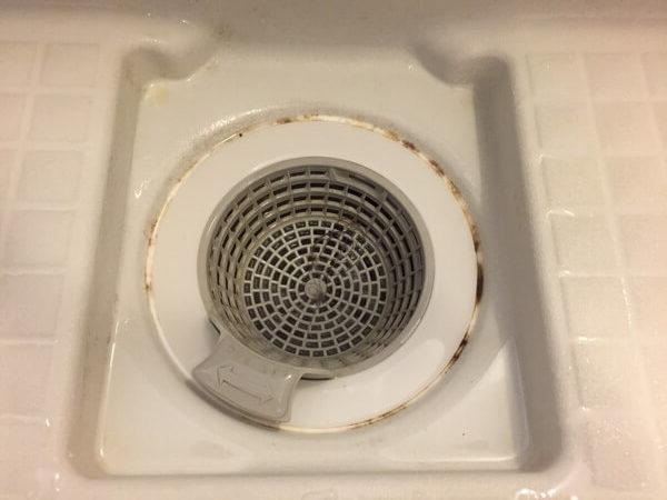 カビ 風呂場 排水溝